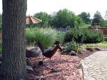 HCHS garden tour 2015 wesche2